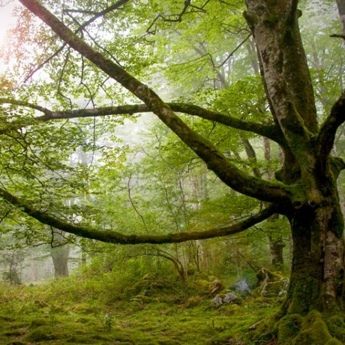 print-fine-art-forest-mystic