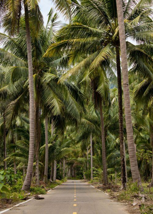 road-heaven-thailand-koh-chang-palmtrees-fine-art-print